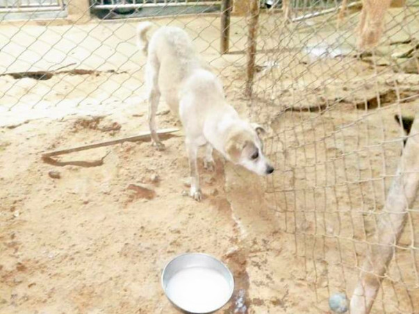 Help Girish Build Shelters for Rescued Animals
