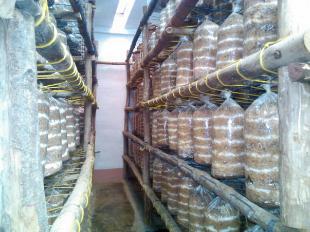 I am fundraising to economic upliftment with Mushroom Cultivation