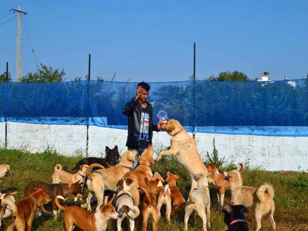 Help Haris Ali build a better shelter for his rescued doggies