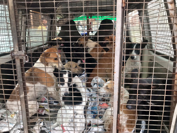 FEED and STERILIZE - Two MAIN Focus(100+ Dogs of Ghukna, Ghaziabad)