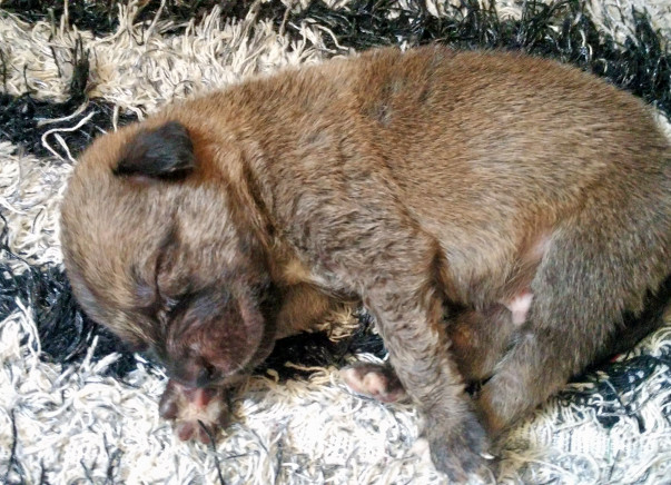 Help Us In Sterilisation Of Stray Dogs In Delhi