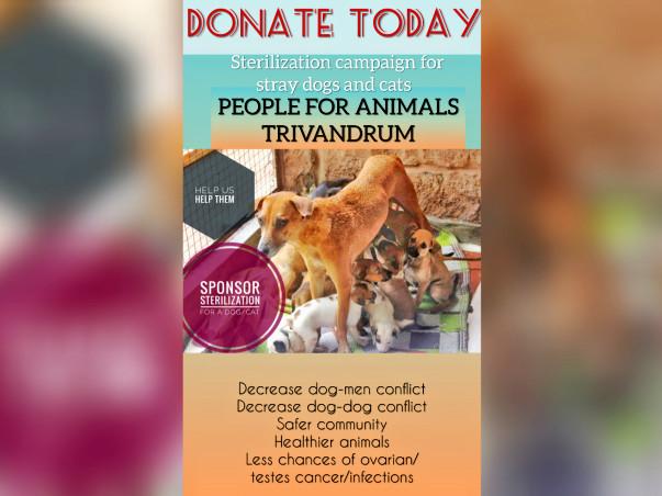 Stray Dog/Cat Sterilization campaign