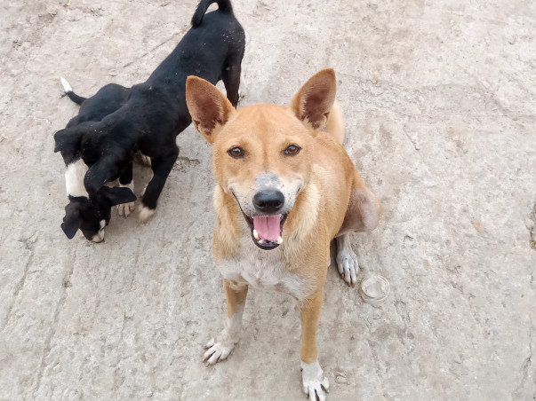 Help us feed the stray mummy dogs and its kids