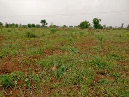 High Density Mango Plantation in Mahbubnagar, Telangana   Milaap