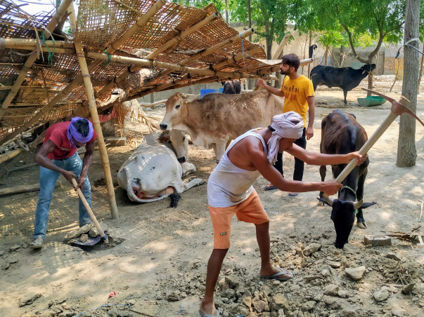Save Animals from Flood and Rain. Help us in building their sheds.