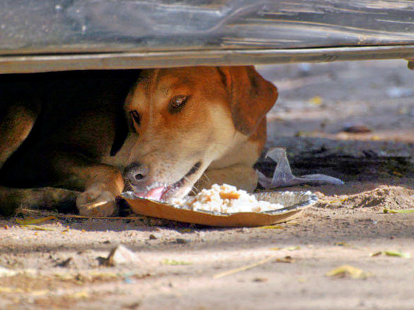 Feed 100 stray dogs in Indiranagar, Bangalore