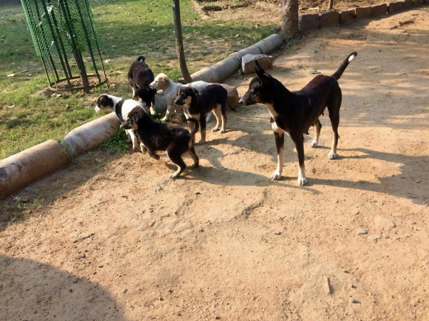 Let's Spread LOVE For the Dogs at Sanjay Van!