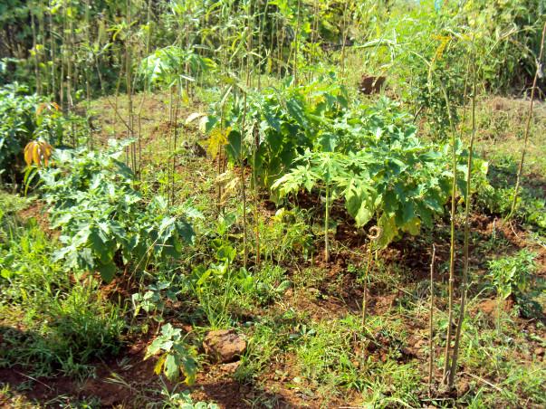 Planting 10000 Fruit Bearing Trees