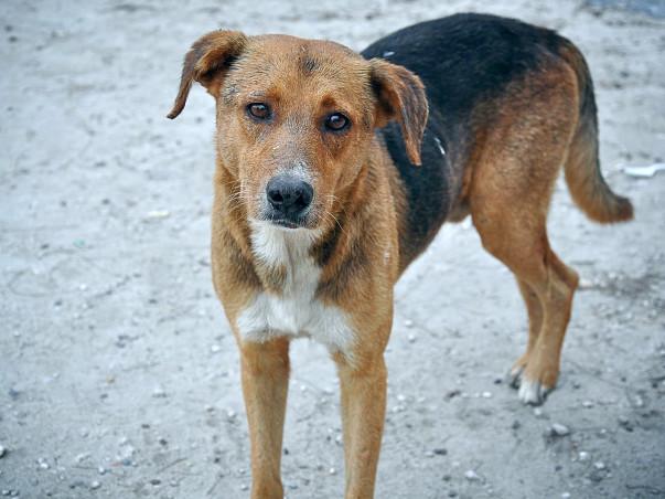 Help Kalyani Animal Welfare Foundation Save Street Dogs of India