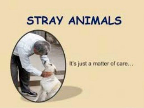 Help provide food for Street Animals