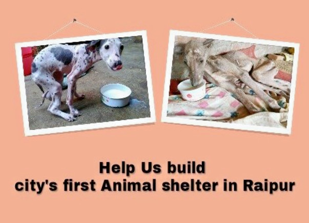 Help Us Build City's first Animal shelter in Raipur, Chhattisgarh