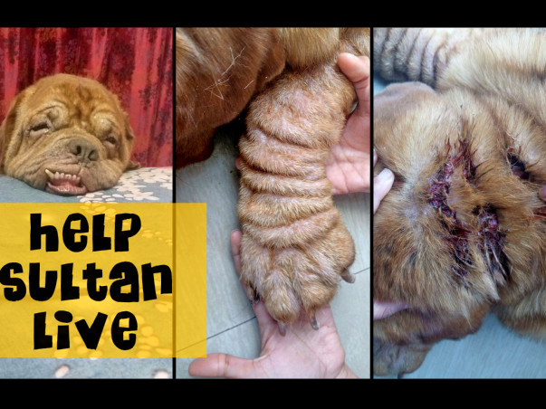 Help Sultan fight against his deadly infection ! #GetwellSoonSultan