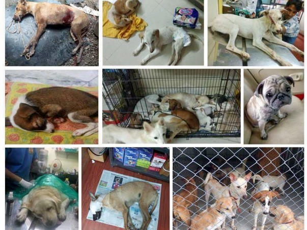 Help us build a shelter for sick, injured, paralyzed and old animals!