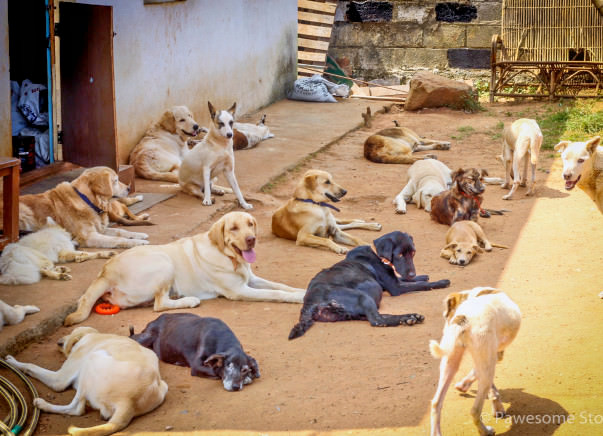Help This Animal Lover Fulfill His Dream Of Rescuing Dogs
