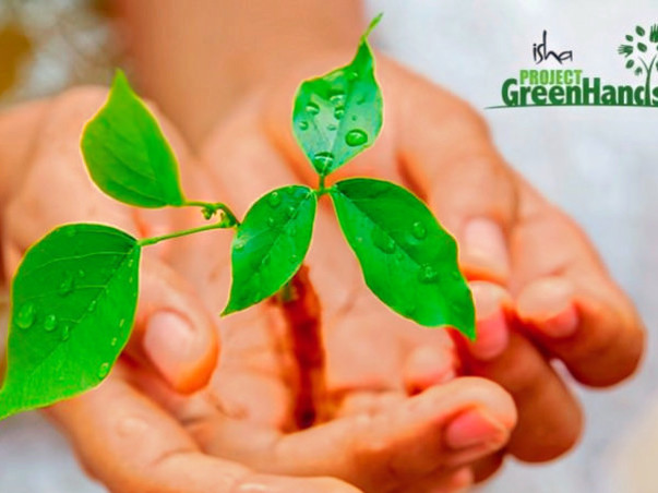 Plant Trees with Project Green Hands!