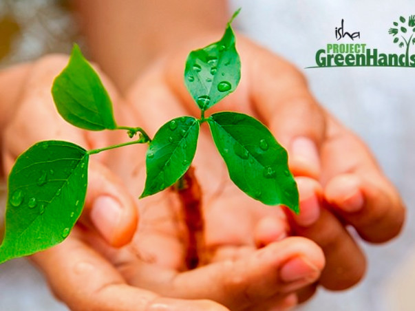 Plant trees and offset your carbon footprint with Project Green Hands!