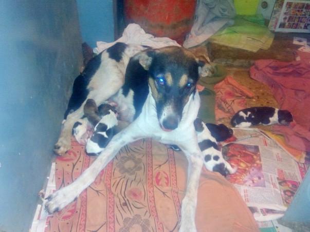 Rescue Chotu and 8 pups