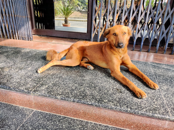 Help Ginger reaching his forever home