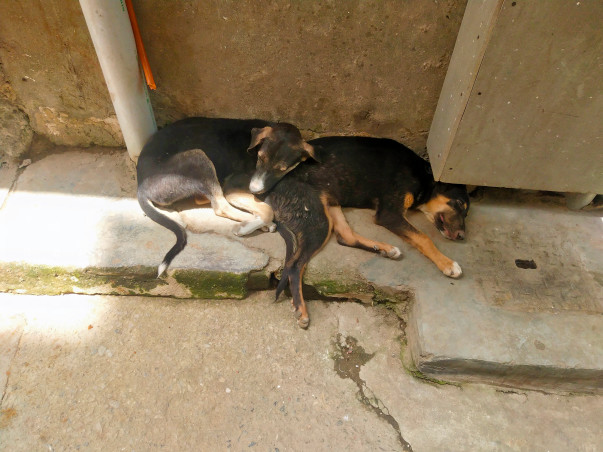 Help Stray Puppies fight back viral infection