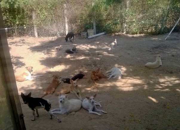 Help Me Build A Room to House Stray Dogs
