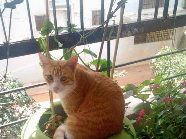 Help Start Bangalore's First Cat-Only Shelter