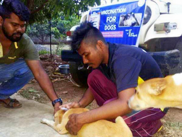 Vaccination Campaign for Dogs