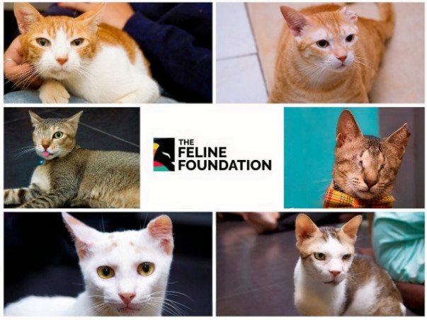 Help Fund Lifesaving Surgeries for Stray Cats