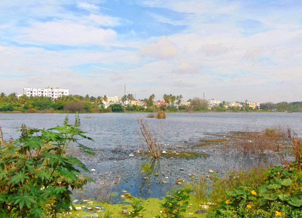 Peace Ride: Restoration of Horamavu Lake, KR Puram