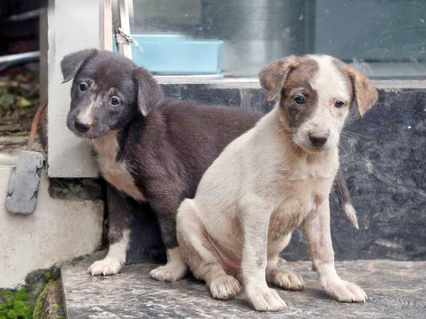 Treatment of Street Animals in Thane and Mulund