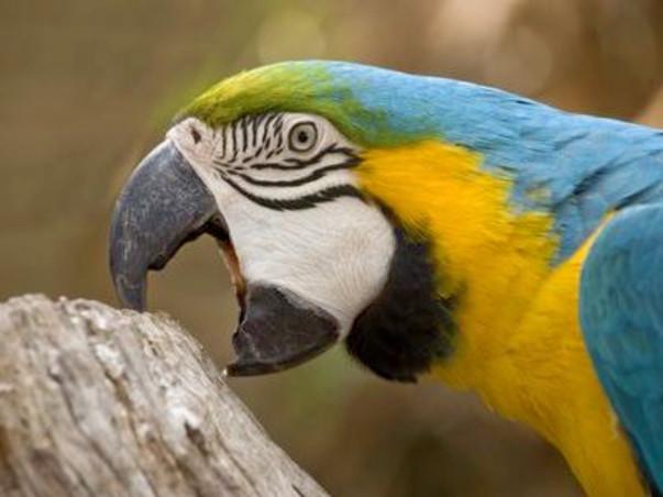 Help Us Save Parrots