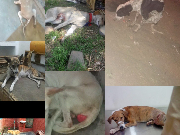Help homeless dogs and cats to get a home....by taking a rented place