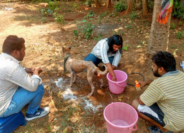 Help Us Build The First Animal Rehab Home In Odisha