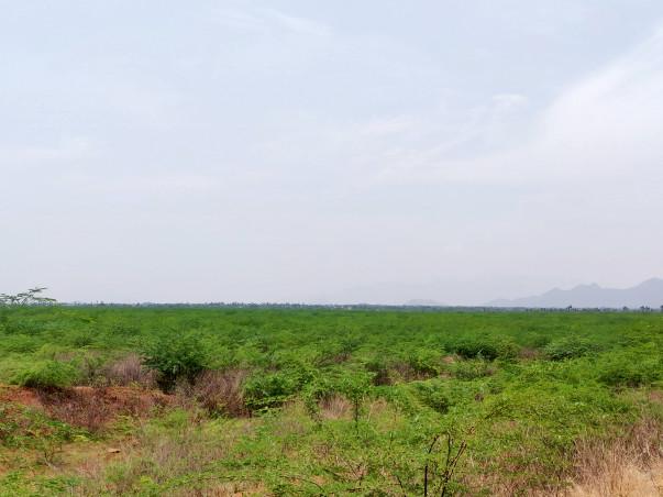 Lake Rejuvenation- Musiri ,Namakkal