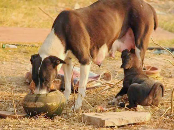 Help Aashram, A Permanent Home For Animals.