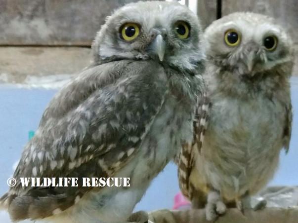 Save Birds of Delhi!!!