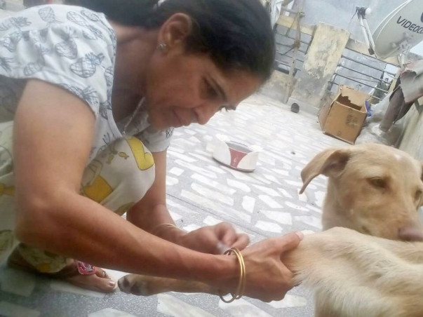 Help Anita Save Stray Dogs In Delhi