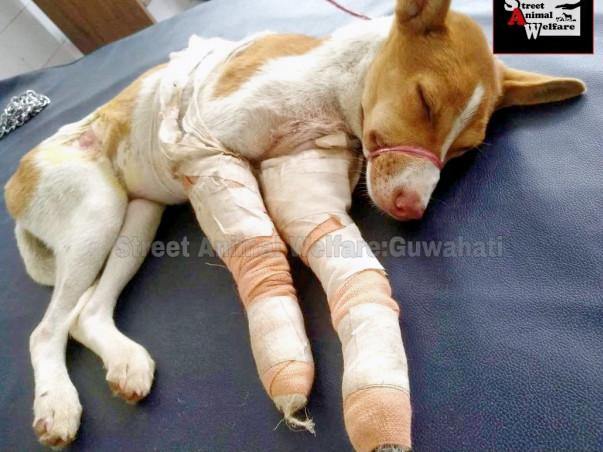 Help Street Animals of Guwahati