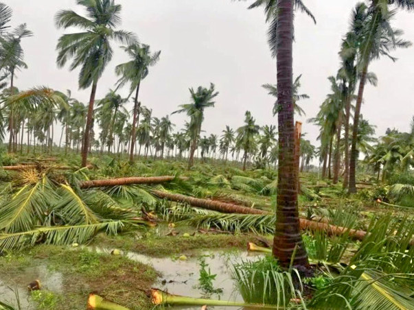 Help families to Recover from Cyclone 'Gaja'