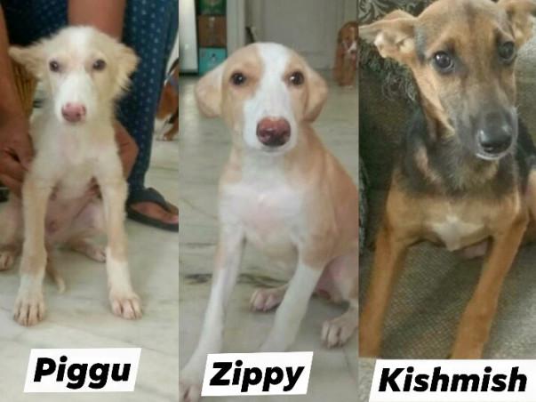 Help Piggu, Zippy, Kishmish fly to New Jersey, USA