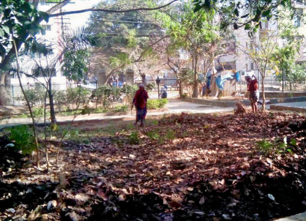 Bengaluru Marathon: Shredding and composting of leaves in HSR Layout