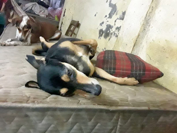 Help Renuka aunty to save 20 orphaned and abandoned dogs and cats!!