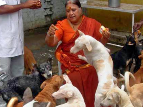 Support an old couple with their animal shelter