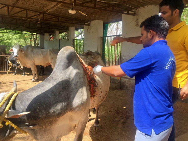 Support Me In Building New Cowsheds For The Rescued Cow,Bull,calf..etc