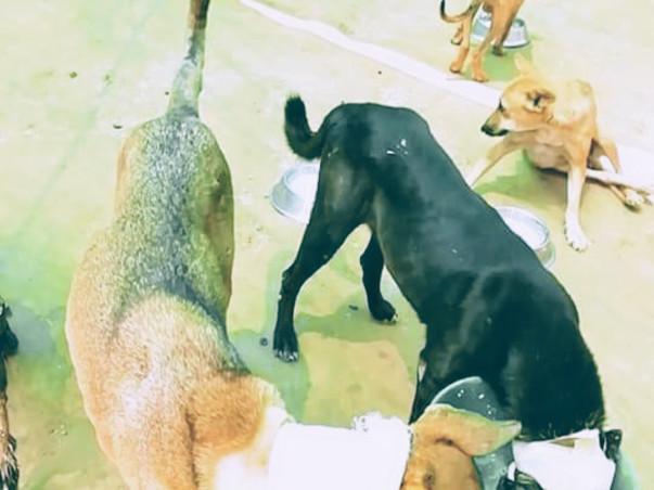 Animals Hospital Need Help.