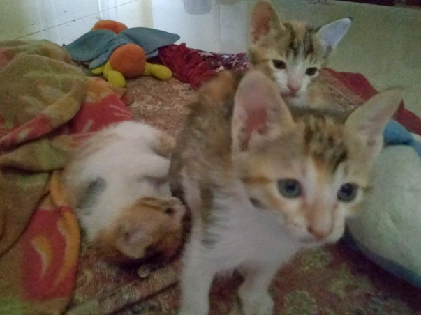Help Raise Funds For Food/Vacinnes/Spaying Of Motherless Kittens