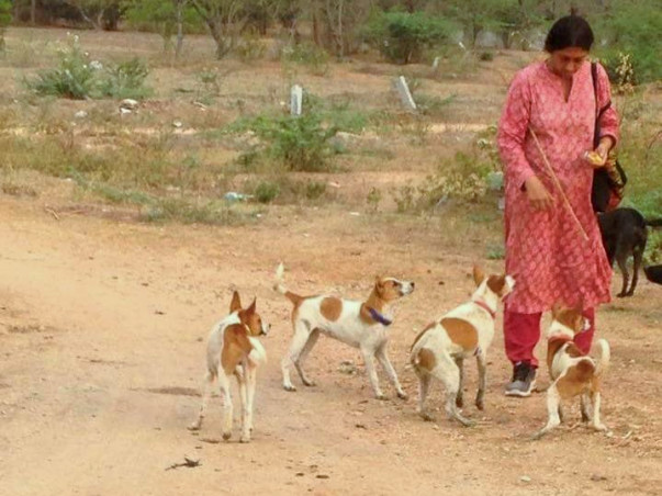 Help PAWS Andhra Pradesh set up a Speciality Animal Hospital