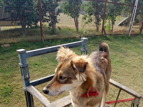 Help Guddu find a forever home