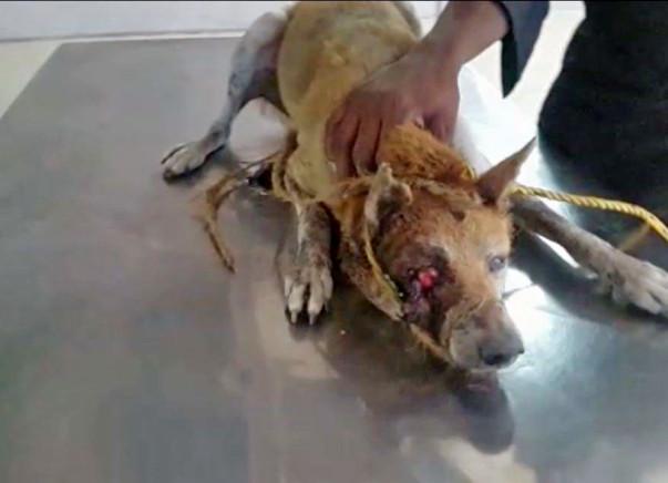Help Us Purchase A New Animal Ambulance