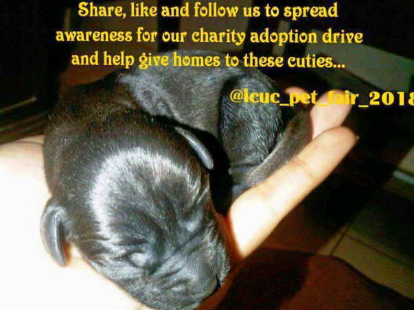 Help our indigenous pooches find a home. Because all paws are lovable