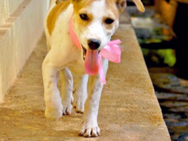 Help ALAI Rescues Get A Permanent Shelter